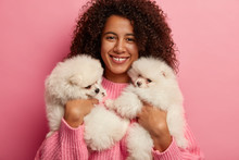 Cropped Shot Of Beautiful Afro American Woman Plays With Puppies, Holds Two White Spitz Dogs Who Express Loyalty And Devotion, Learns About Pet Treatment, Spend Free Time At Home, Isolated On Pink