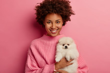 Photo Of Positive Woman With Afro Haircut Holds White Spitz Dog On Hands, Dressed In Knitted Sweater, Isolated Over Pink Background. People, Pets, Animal Care Concept. Hostess Shows Fluffy Dog