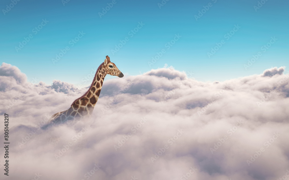 Fototapeta Giraffe above clouds. This is 3d render illustration