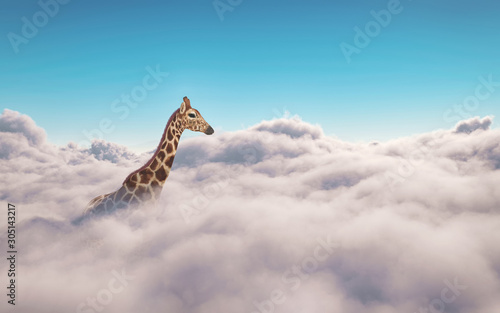 Giraffe above clouds. This is 3d render illustration Wallpaper Mural