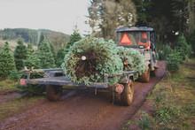 Christmas Tree On Tractor At Tree Farm