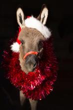 Christamas Donkey