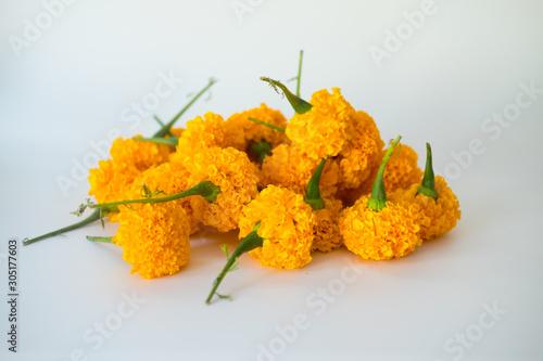 Yellow marigold flower on white background Canvas Print
