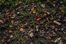 Autumnal Forrest Floor Background Texture