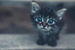 One little kitten outdoors
