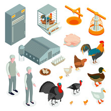 Poultry Farm Isometric Icons