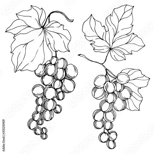 Vector Grape berry healthy food Canvas