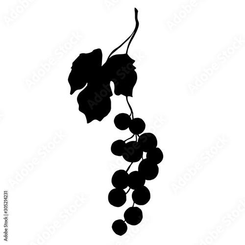 Vector Grape berry healthy food Canvas-taulu