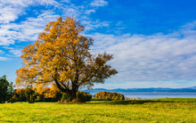 Tree In  Golden Fall Foliage With  Lake Champlain And The Adirondack Mountains In New York