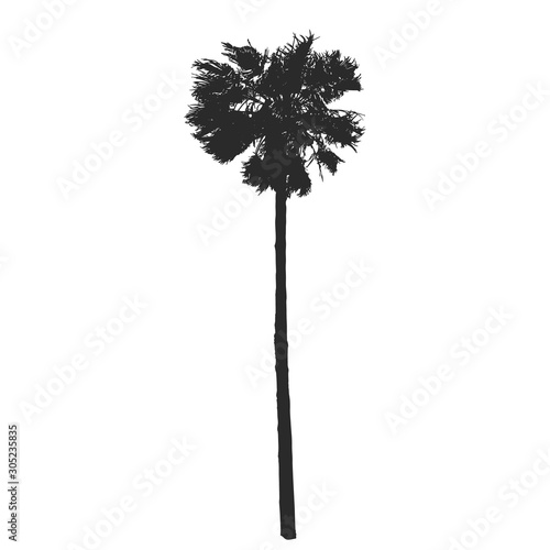 Realistic palm tree silhouette. Vector illustration. Wall mural