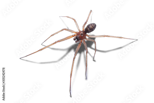 Valokuva spider isolated on white background, macro photography