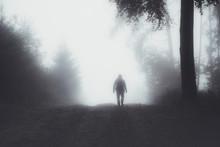 Spaziergänger Im Wald Mit Nebel