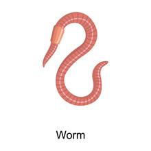 Earthworm Vector Icon.Cartoon Vector Icon Isolated On White Background Earthworm.