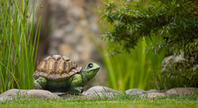 Garden Toy, Turtle, On The Gre...