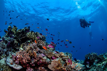 A diver swimming over a colorful reef