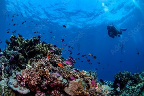 Nurek pływający nad kolorową rafą