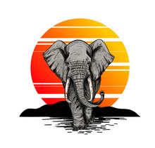 Bic Elephant, Front View, Suns...