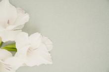 White Gladiolus Floral Flat La...