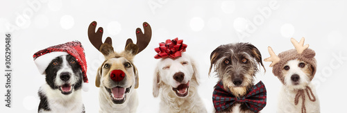 Banner five dogs celebrating christmas holidays wearing a red santa claus hat, reindeer antlers and red present ribbon. Isolated on gray background - 305290486