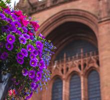 Blume Im Vordergrund Und Liverpool Kathedrale Im Hintergrund