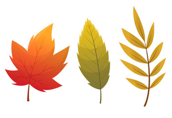 Fall leaf collection. Set of autumn leaves, isolated on white background. Simple cartoon flat style, vector illustration. Multicolor autumn leaves flat vector icons