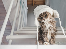 Young, Charming Kitty In A White Wool Hat Sitting On Step On A Sunny, Spring Morning. Close-up, Isolated Background. Studio Photo. Concept Of Care, Education, Training And Raising Of Animals