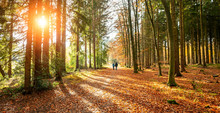 Two People Walking In Silent Forest In Autumn With Beautiful Bright Golden Sun Rays