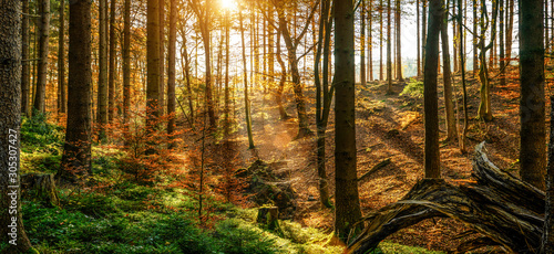 Photo Stands Akt Silent Forest in spring with beautiful bright sun rays