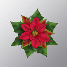 Christmas Flower Isolated