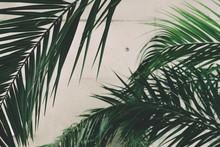 Tropical Palm Leaves Shot Agai...