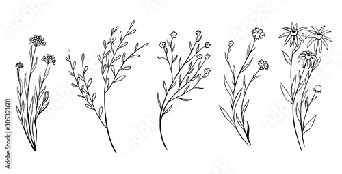 Fototapeta Vintage collection hand drawn vector illustration. Set of sketches field plants and flowers. Monochrome outline graphics isolated on white. Botanical elements for design, card, prints, cloth, poster. obraz