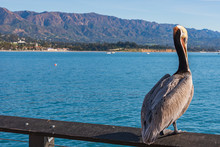 A Pelican Resting On The Handrail Of A Pier