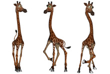 Set Of Three Cartoon Giraffes ...
