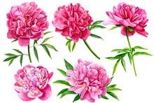 Set Of Beautiful Flowers, Peon...
