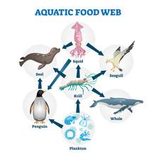 Aquatic Food Web Vector Illust...