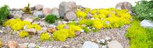 Panorama Of Rockery Rock Garden Isolated On White Background