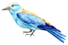 Beautiful Blue Bird On Isolated White Background, European Roller, Watercolor Illustration