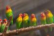 Lovebirds parrots in the zoo