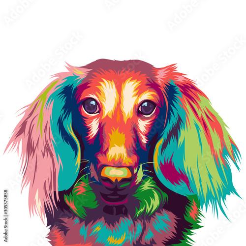 Fototapety, obrazy:  dachshund dog in colorful vector