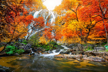 Fototapeta Do salonu Amazing in nature, beautiful waterfall at colorful autumn forest in fall season