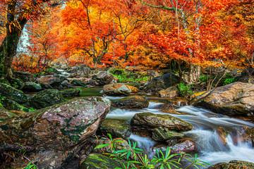 Fototapeta Las Amazing in nature, beautiful waterfall at colorful autumn forest in fall season