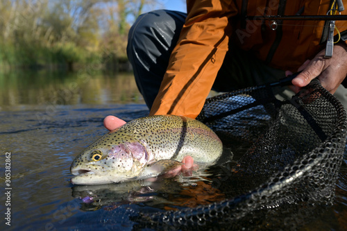 Obraz capture of a rainbow trout by a fly fisherman in autumn - fototapety do salonu