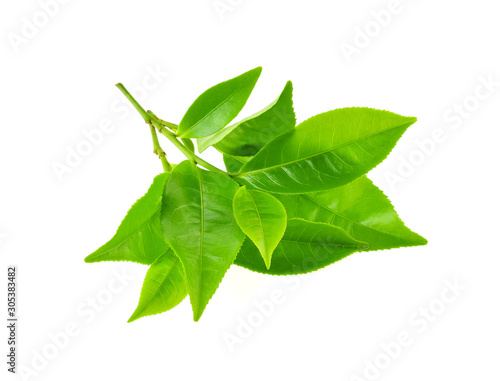 Obraz Green tea leaf isolated on white background - fototapety do salonu