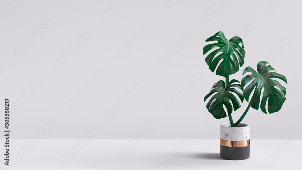 Fototapeta Monstera plant in pot isolated on white background. Minimal tropical leaves houseplant home decor. 3d rendering.