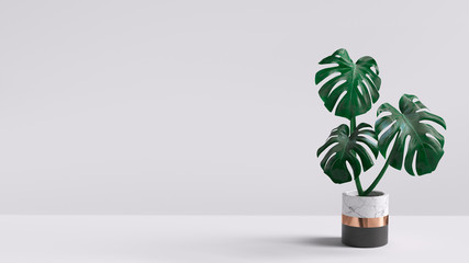 Monstera plant in pot isolated on white background. Minimal tropical leaves houseplant home decor. 3d rendering.