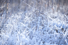 Snow, Frost, Ice Covers Dry Gr...