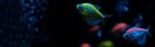 Selective Focus Of Aquarium Fi...