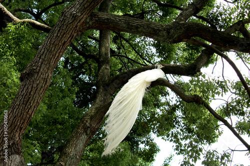 Photo paon blanc sur une branche d'arbre