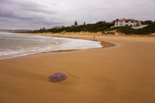 Jellyfish Washed Up On Robberg Beach
