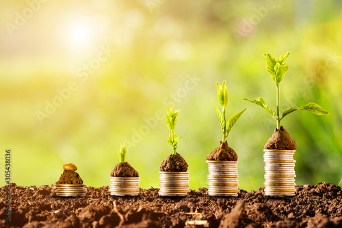 Fotografía  Plant glowing on coins stacking with greenery background and sunlight
